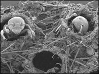 La trampa mortal de la hormiga