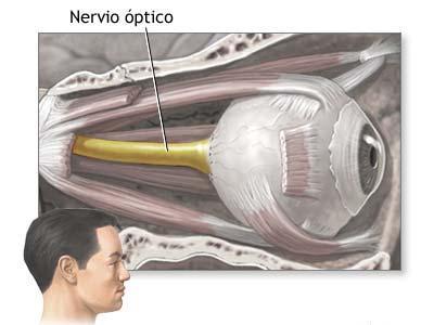 Regeneran el nervio óptico de un ratón